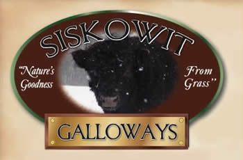 siskowit_galloways-1