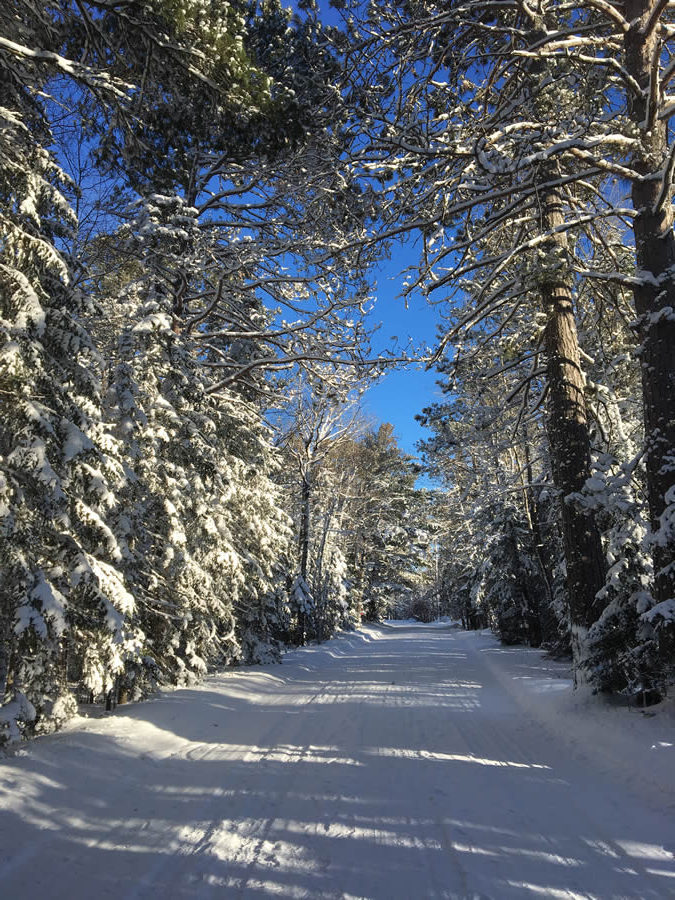 cornucopia-wisconsin-winter-trees-scene